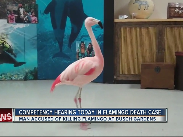 Competency hearing today in flamingo death case