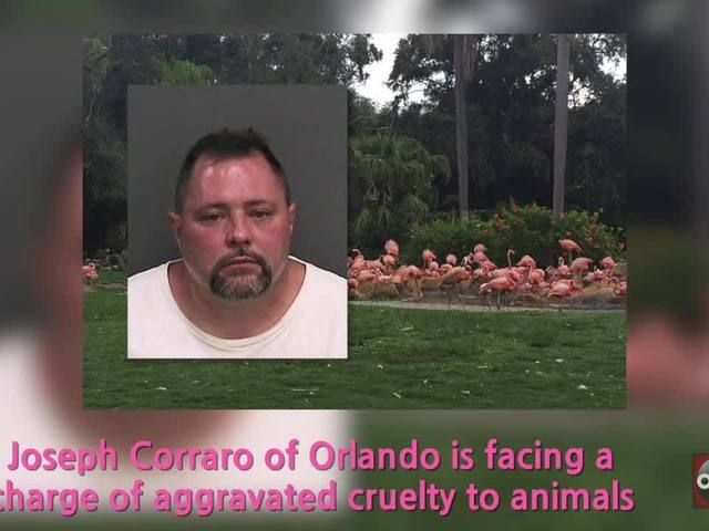 Man's competency questioned in 'Pinky' the flamingo's death
