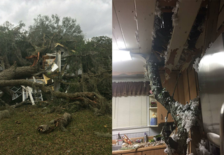 Storm topples tree, destroys home in Citrus Co.