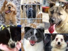 Six dogs rescued from meat farm up for adoption