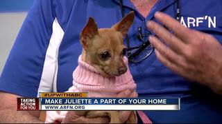 Rescues in Action: Help find Juliette a home
