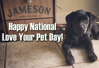 National Love Your Pet Day: Send us your photos