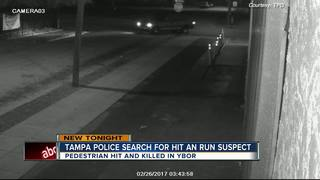 Pedestrian dies in hit and run in Tampa