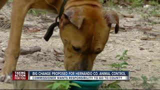 Hernando Co. considers changes to animal control