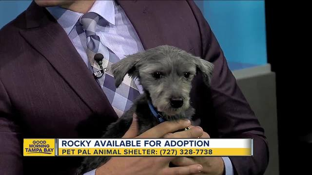 Pet of the week- 9-year-old Rocky wants to find his Adrian to treat him…