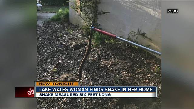Florida woman discovers she spent all day working next to six foot long…