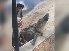Florida residents upset after gator is killed