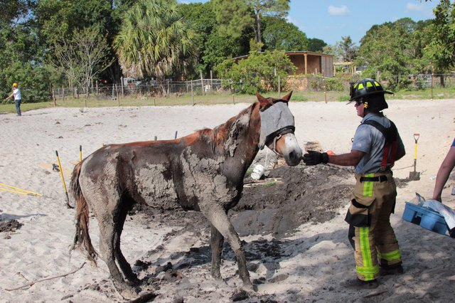 Florida firefighters rescue horse trapped in mud pit