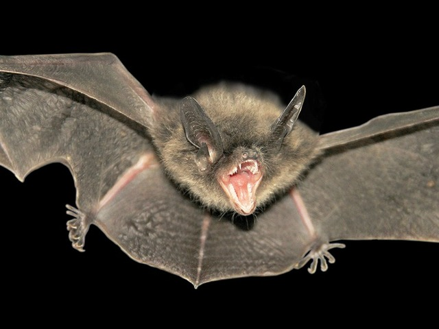 Florida resident dies of rabies from bat bite, health official says