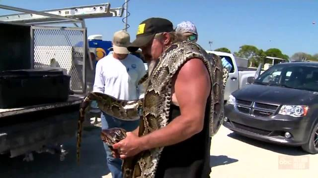 Snake hunter gets big paycheck after catching longest snake of the season