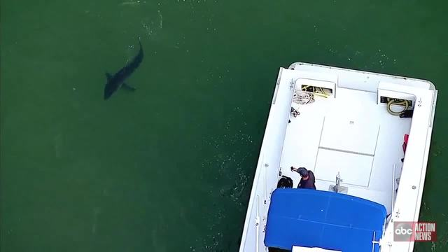 OC Police Chopper Alerts Surfers in Shark Infested Waters
