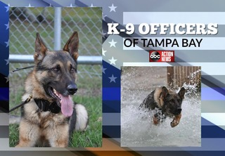 PHOTOS | K-9 Officers of the Tampa Bay area