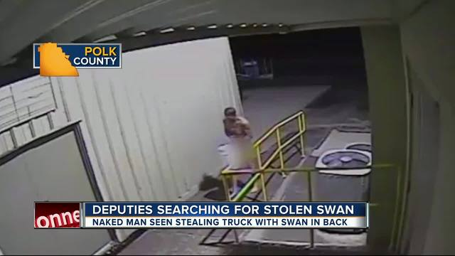 Naked man seen stealing truck with swan in back