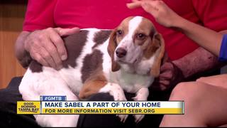 Rescues in Action: Sable sniffs for forever home