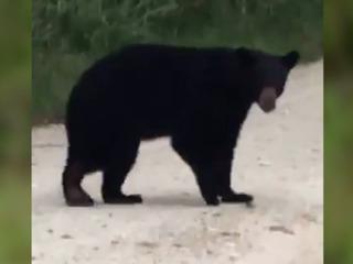 Black bear terrorizes Sebring neighborhood