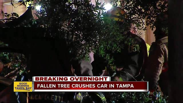 Driver dead and Tampa roads closed after tree falls on vehicle