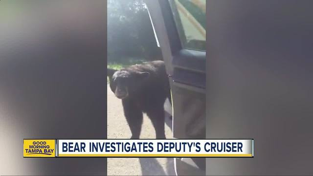 Florida police officer stops to chat with curious bear