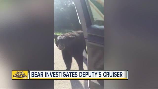 Florida Deputy Has Close Encounter With Bear
