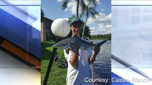 Tampa residents shocked to find bull sharks in Hillsborough River-Digital Short