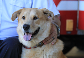 Clearwater arson dog Quincy in national contest