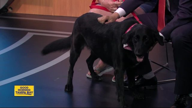 Pet of the week- Dixie is a 3-year-old Labrashepherd who needs a forever home