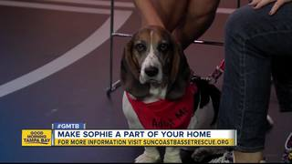 Rescues in Action: Sophie seeks forever friend