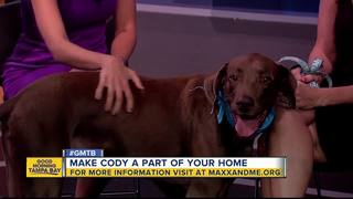Rescue in Action: Cody seeks forever home