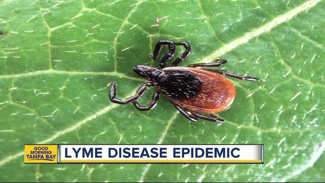 Doctors predict Lyme Disease epidemic- Tampa Bay possible hotbed of…