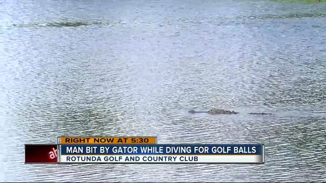 Man diving for golfballs is attacked by alligator