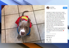 Cowboys player's reunited with lost dog