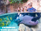 You can now swim with sharks at Discovery Cove