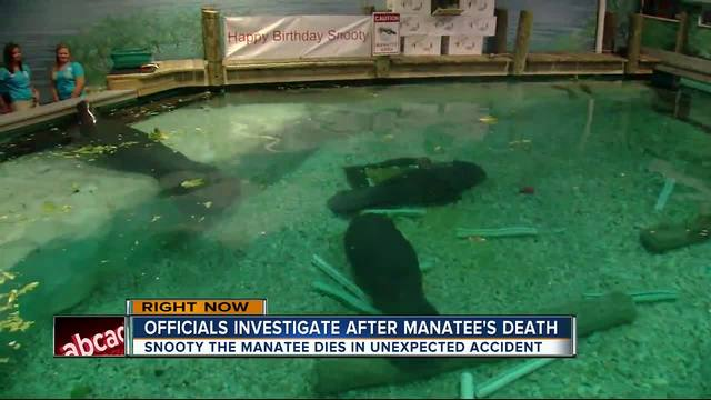 Snooty the manatee dies in tank accident