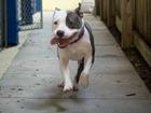 Dog DNA tests popular, but how effective?