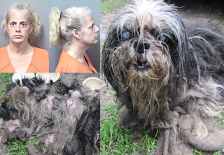 Blind dogs found covered in live maggots, feces