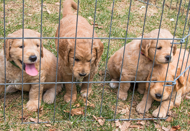 This Animal Shelter is Waiving Adoption Fees For Military Members on Veterans Day
