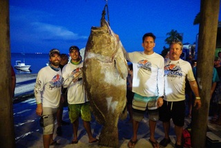 Florida firefigher spears 409-pound grouper