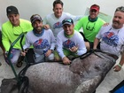 Local firefigher spears 409 lb. grouper