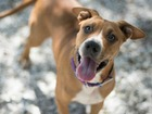 Pet of the week: 9-month-old Claire needs a home