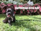 Pamper your pooch for National Dog Day