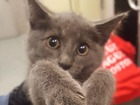 Troopers close highway tunnel to rescue kitten