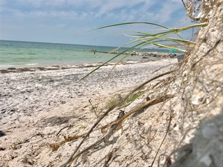USF studying Irma's impact on Pinellas beaches