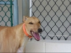 Meet sweet Nate.Can you give him a forever home?