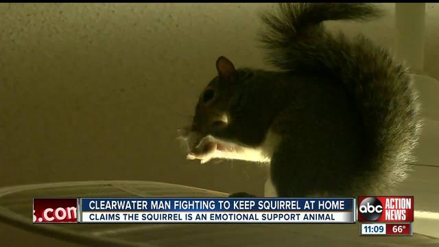 A Clearwater man is fighting to keep a squirrel as a pet inside his condominium