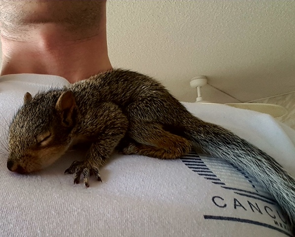 Florida man fighting to keep emotional support squirrel
