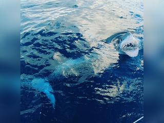Fisherman catches mako shark off Tampa Bay coast