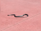 Snake removed from entrance to Magic Kingdom