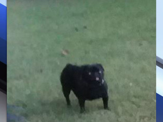 69-year-old's car stolen with dog still inside