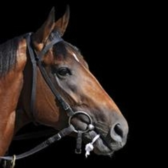 Lifestyle Auto Horse Racing on Florida Horse Racing Jockey Charged In Bribery Case