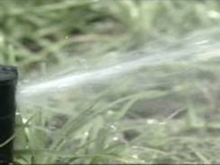 The once-a-week watering order is set to expire at the end of the month.