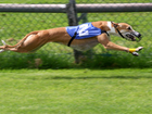 Floridians vote to end greyhound racing